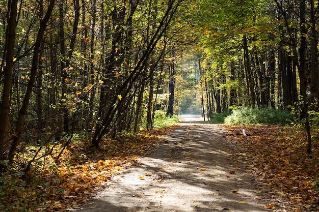 Herbst im stadtpark, bäume in gelbem laub,