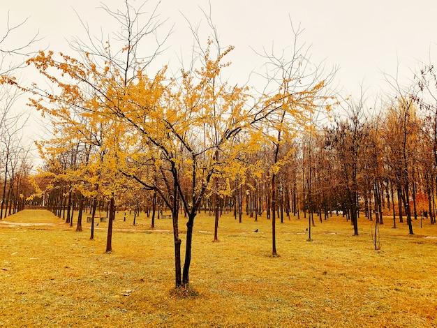 Herbst in einem park. bunte bäume und landstraße im tiefen herbstwald