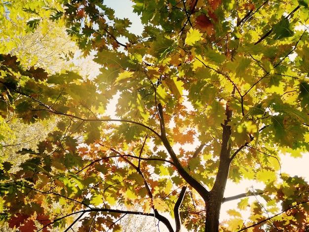 Herbst in einem sonnenpark