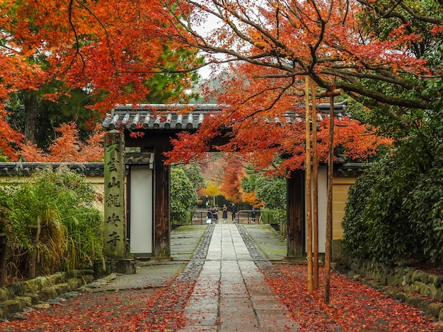 Herbst in kyoto