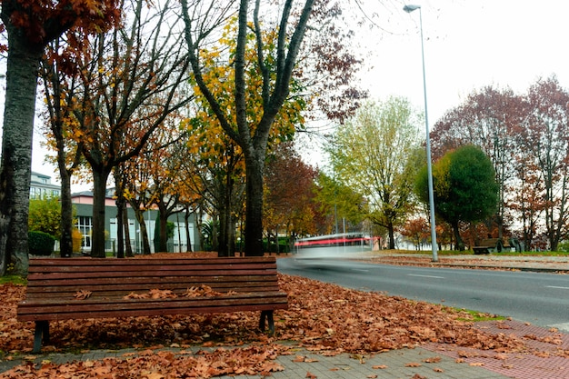 Herbst in lugo