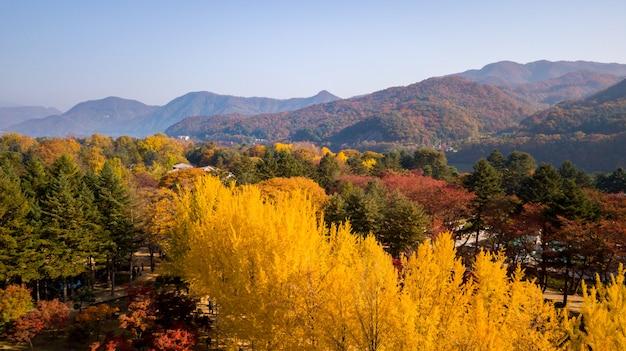 Herbst in südkorea