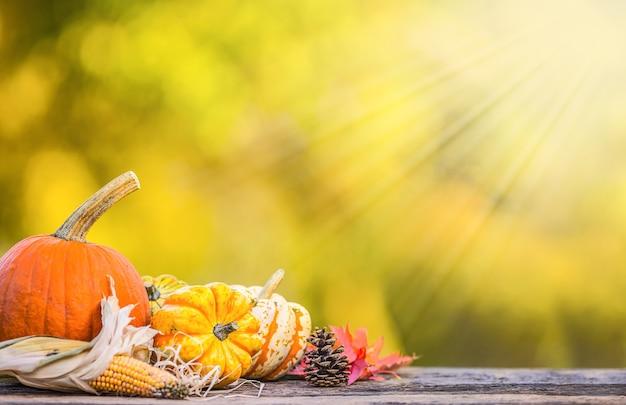 Herbst-konzept. kürbisse, maiskolben und blätter im garten auf holzhintergrund.