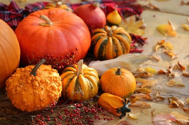 Herbst kürbisse festgelegt. das erntedankfest. herbstgemüse. kürbisse, zweige mit beeren. herbstsaison