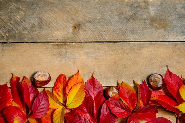 Herbst leuchtend gelb-rote blätter auf einem holz.