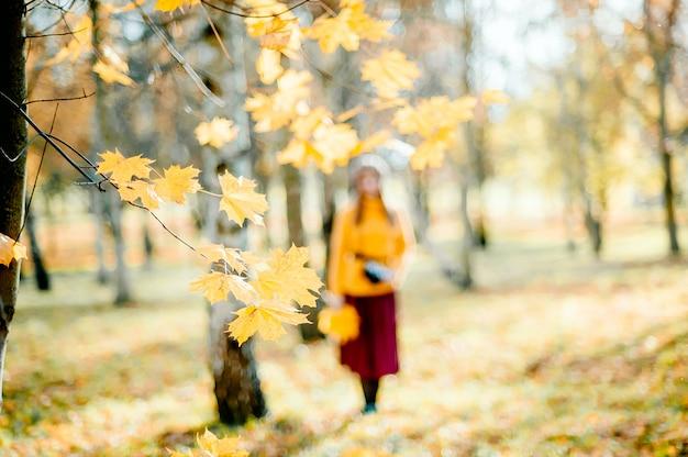 Herbst mit ahornblättern