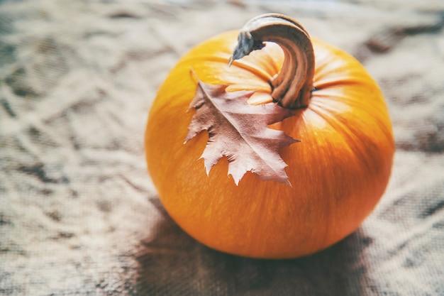 Herbst mit kürbis. erntedank.