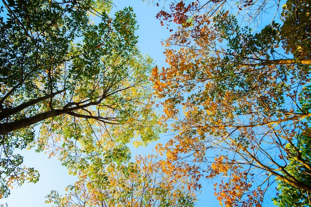 Herbst natur baum im sonnenuntergang natur himmel hintergrund