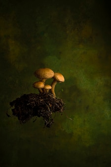 Herbst natur konzept. honigpilze mit blättern auf grünem hintergrund. Premium Fotos