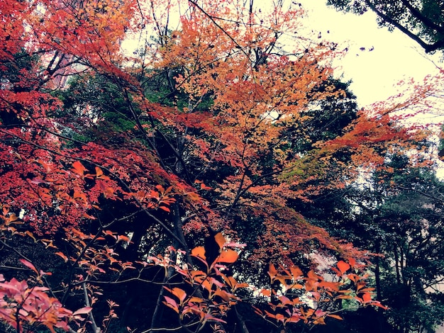 Herbst-rot verlässt natur-landschaft