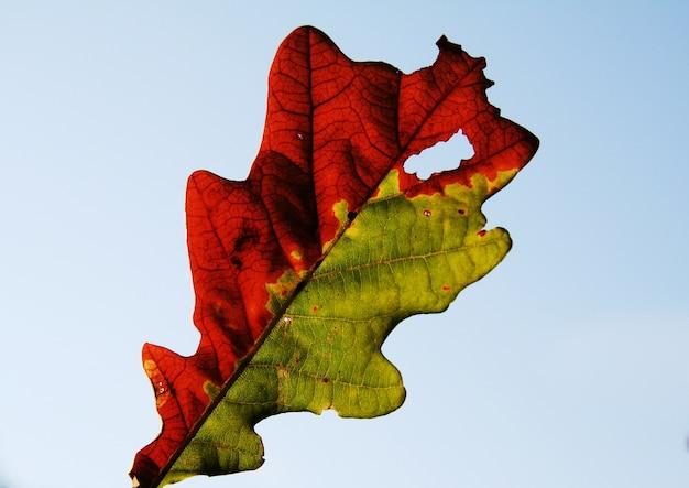 Herbst schöne blätter