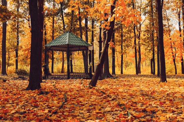 Herbst sonnige landschaft.