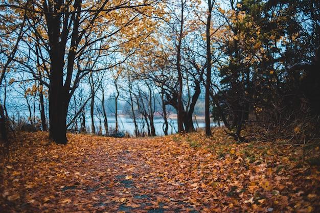 Herbst waldlandschaft