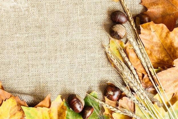 Herbstahornblätter und -kastanien, die auf einem braun liegen.