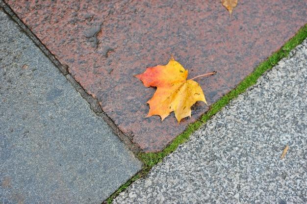 Herbstahornblatt, das auf dem nassen granit liegt