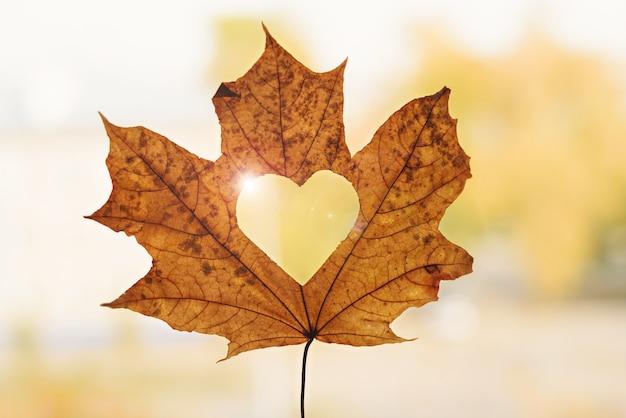 Herbstahornblatt mit herz nach innen, herbsthintergrund