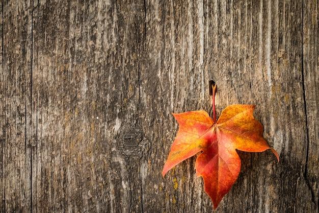 Herbstahornblatt über altem holz