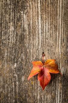 Herbstahornblatt über alter holzoberfläche