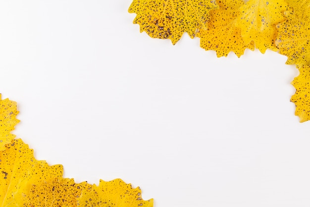 Herbstartmuster mit dem kopienraum umgeben durch trockene gelbe blätter