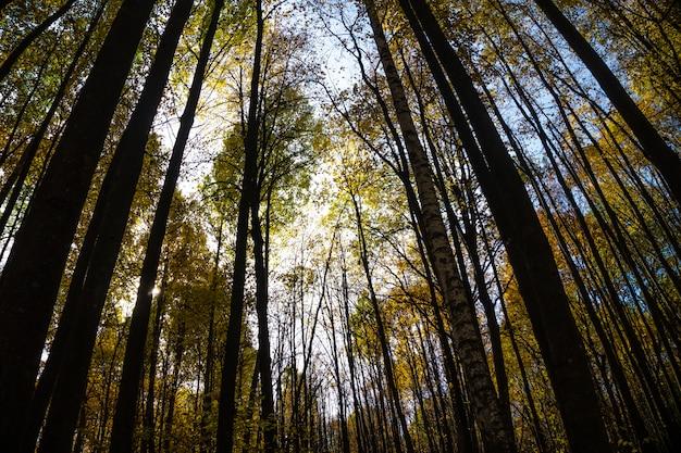 Herbstbäume im wald am sonnigen tag. perspektivische ansicht