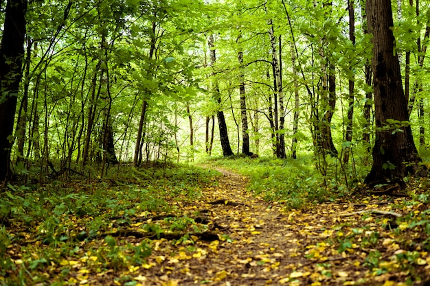 Herbstbäume im wald mit gelbem gefallenem blatthintergrund