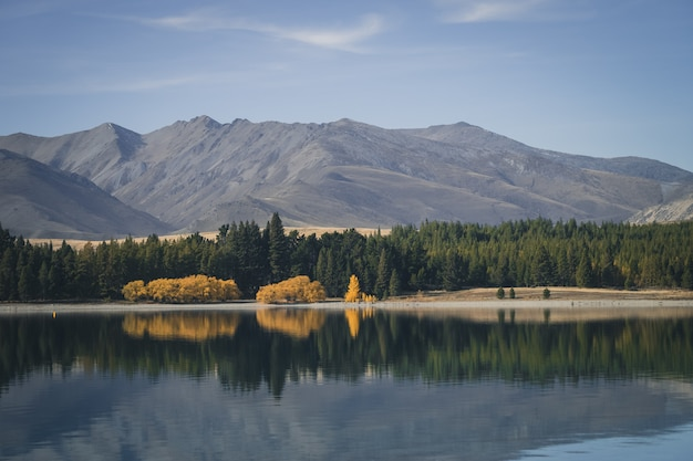 Herbstbäume in neuseeland