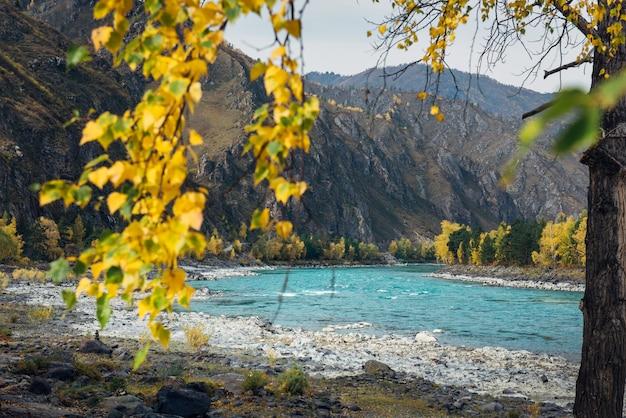 Herbstbäume und smaragdfluss im altai-gebirge