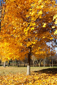 Herbstbaum im wald