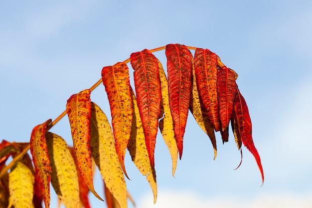 Herbstbaum mit laub änderte in der herbstsaison seine farbe