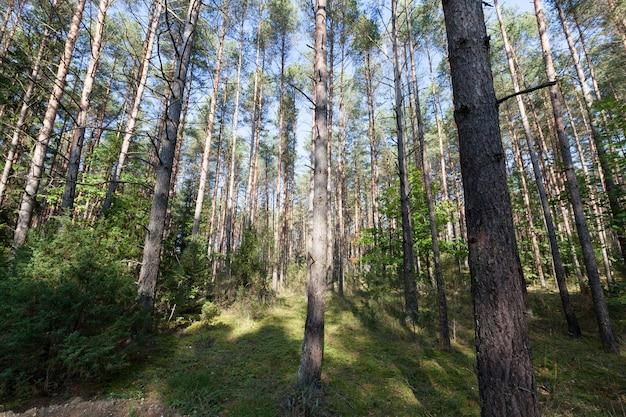 Herbstbaum mit laub, das in der herbstsaison seine farbe änderte, landschaft in der herbstsaison während des laubfalls, natur