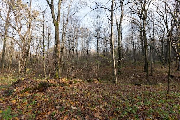 Herbstbaum mit laub, das in der herbstsaison seine farbe änderte, landschaft von laubbäumen in der herbstsaison während des laubfalls, natur