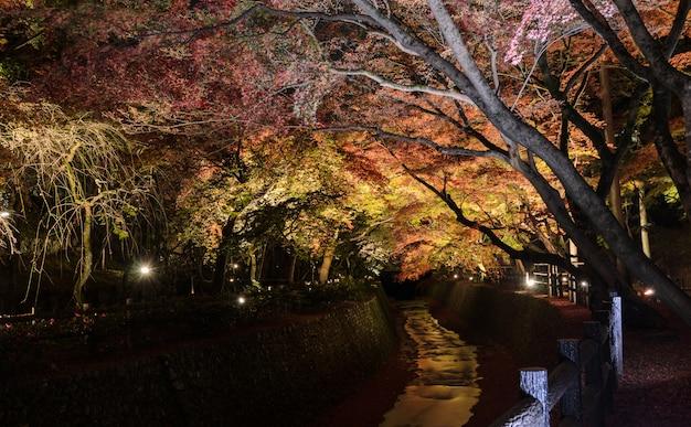 Herbstbeleuchtung des japanischen gartens mit ahornbäumen entlang dem kanal nachts in kyoto, japan