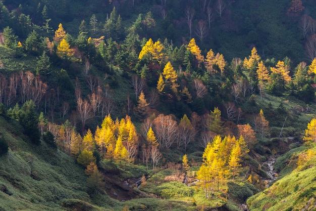 Herbstbergblick auf mt.shigakogen in der präfektur nagano, japan.