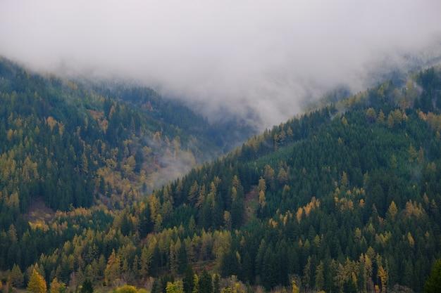 Herbstberge in der nebellandschaft. grünes und gelbes baummuster im nebel. gebirgsnaturhintergrund.