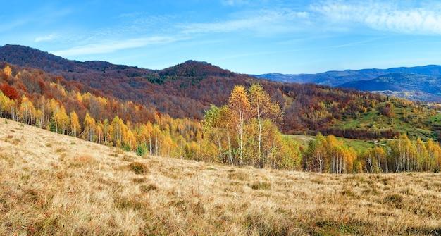 Herbstbergpanorama und birkenwald am berghang. (karpaten, ukraine)