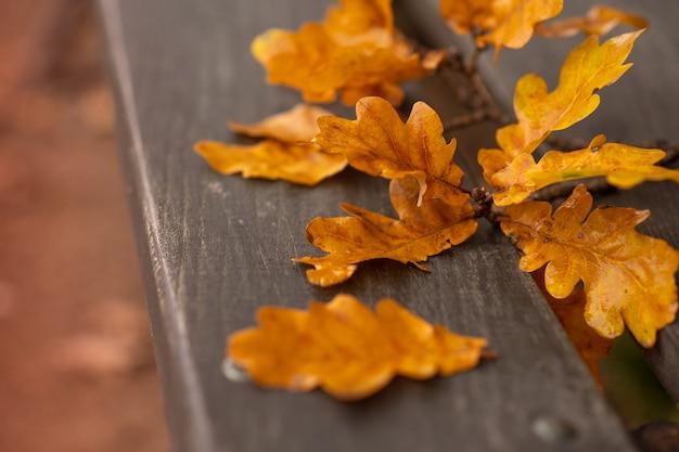 Herbstbild. ein zweig aus herbstlichen gelben eichenblättern liegt auf einer holzbank.
