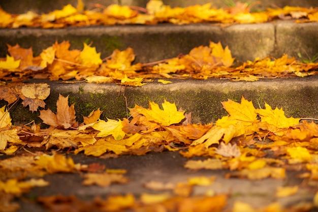 Herbstbild. herbst. die stufen sind mit hellen laub bedeckt, nahaufnahme. hintergrund