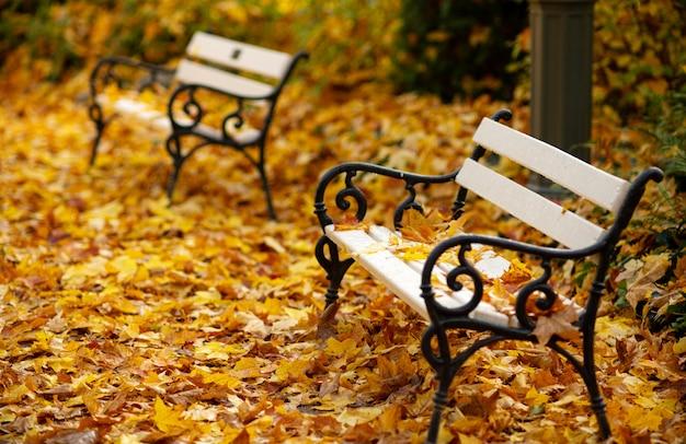 Herbstbild. herbst. eine weiße holzbank in einem stadtpark ist mit gefallenen hellen blättern bedeckt.