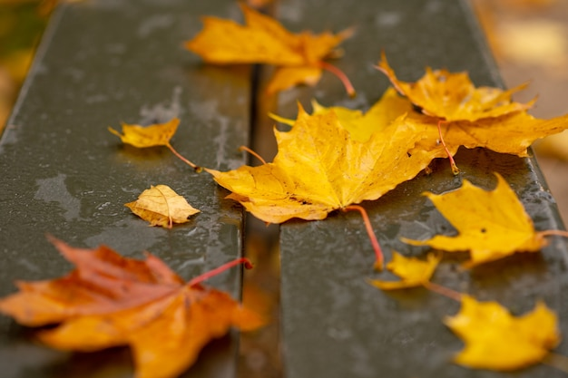 Herbstbild. herbstgelbe gefallene blätter liegen auf einer nassen holzbank in einem stadtpark. regenmalerei aus nächster nähe