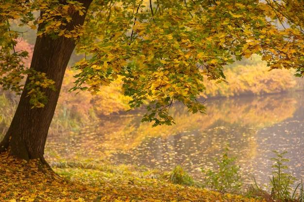 Herbstbild. natur. herbstbaum mit gefallenen blättern und see.