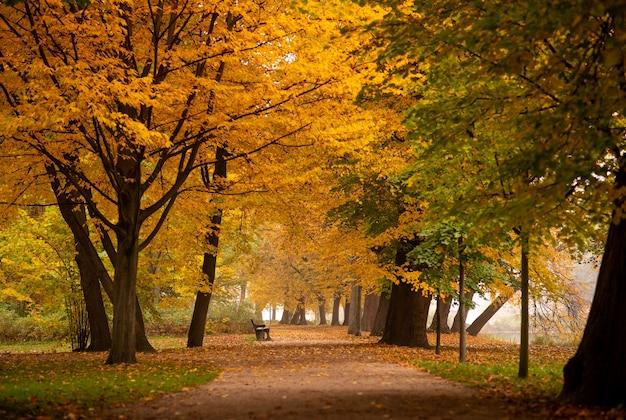 Herbstbild. natur. herbstpfad von hellen bäumen mit gefallenen blättern in einem leeren stadtpark.