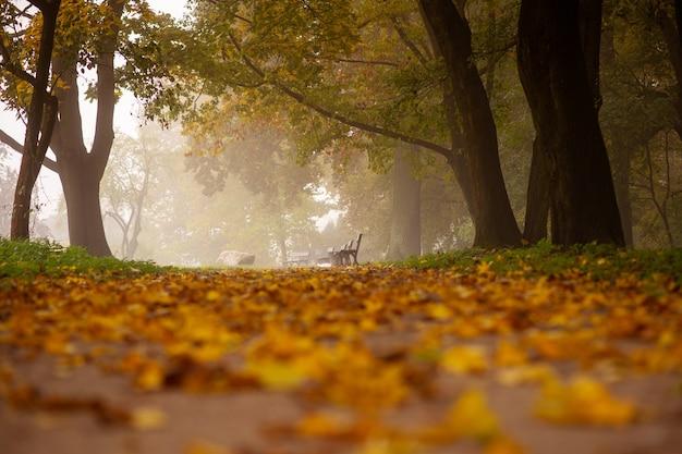 Herbstbild. natur. mysteriöser herbstpfad mit gefallenen blättern im morgennebel. stadtpark.