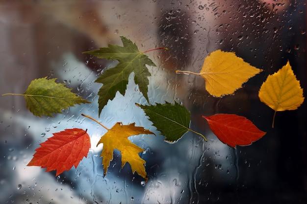 Herbstblätter auf nassem glas bei regenwetter
