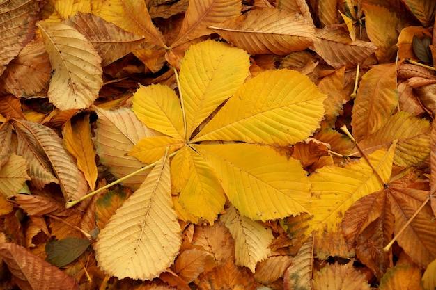 Herbstblätter einer kastanie von gelber tonalität