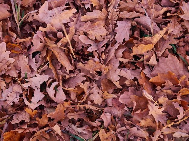 Herbstblätter gemahlene trockene hintergrundbeschaffenheit