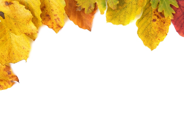 Herbstblätter lokalisiert auf weißem hintergrund