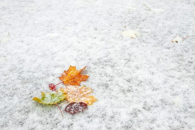 Herbstblätter mit schnee bedeckt