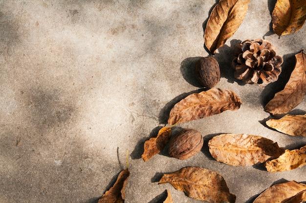 Herbstblätter und nüsse auf betonboden