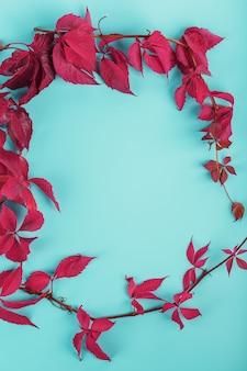 Herbstblätter von rotem efeu