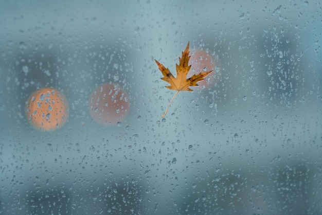 Herbstblatt auf nassem glas